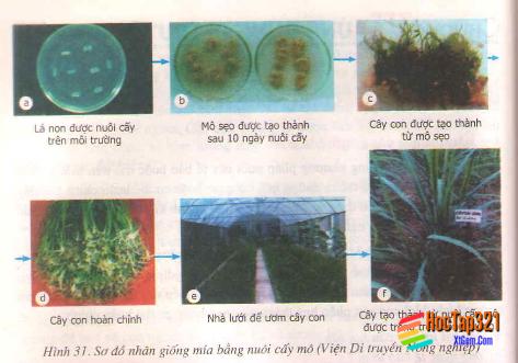 Bài 31: Công nghệ tế bào