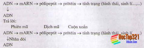 Hướng dẫn giải bài tập  1, 2, 3, 4, 5, 6, 7, 8, 9 trang  102  SGK Sinh học lớp 12