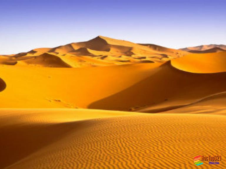 Bài 19: Môi trường hoang mạc
