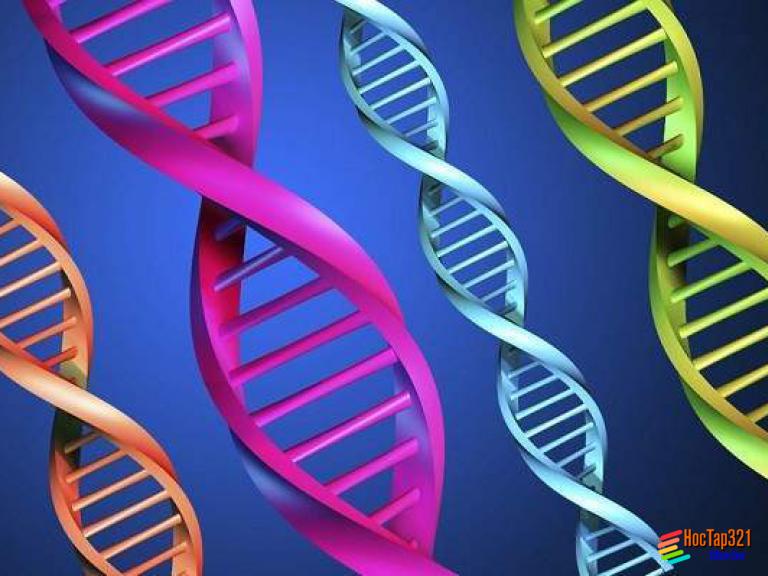 Bài 22: Đột biến cấu trúc nhiễm sắc thể