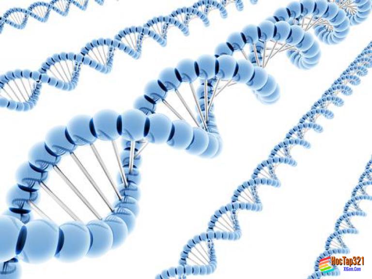 Bài 32: Công nghệ gen