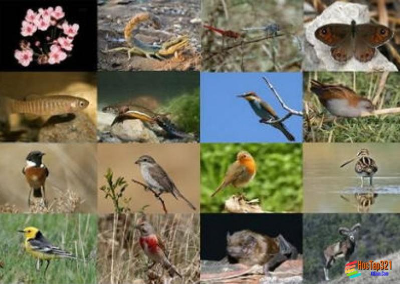 Bài 38: Bảo vệ tài nguyên sinh vật Việt Nam