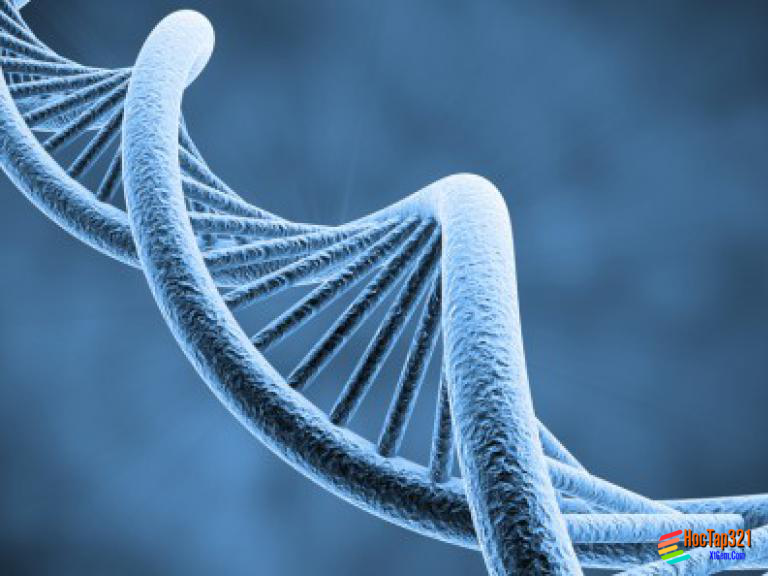 Bài 40: Ôn tập Di truyền và biến dị
