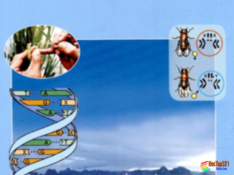 Bài 63: Ôn tập phần Sinh vật và môi trường