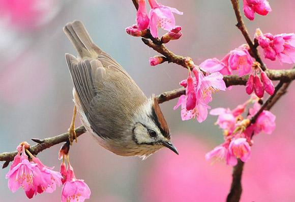 Chứng minh cảnh sắc mùa xuân trong thơ ức Trai rất đẹp và hữu tình