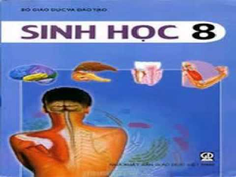 Chương IX : Thần kinh và giác quan – Tiết 8 : Cơ quan phân tích thính giác – Hướng dẫn giải bài tập SGK Sinh học 8, Trang 165