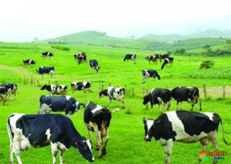 Địa lí ngành chăn nuôi