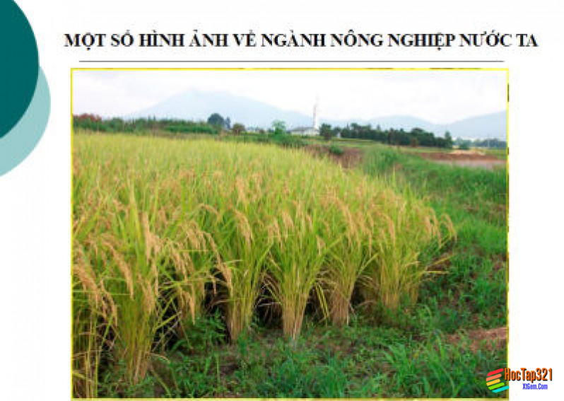 Địa lí ngành trồng trọt