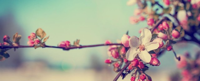 """Dựa vào bài """"Mùa xuân"""" của Vũ Bằng, em hãy nêu cảm nhận về tình cảm quê hương đất nước của tác giả."""