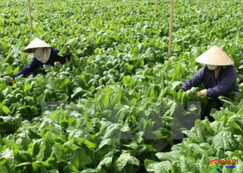 Một số hình thức chủ yếu của tổ chức lãnh thỗ nông nghiệp