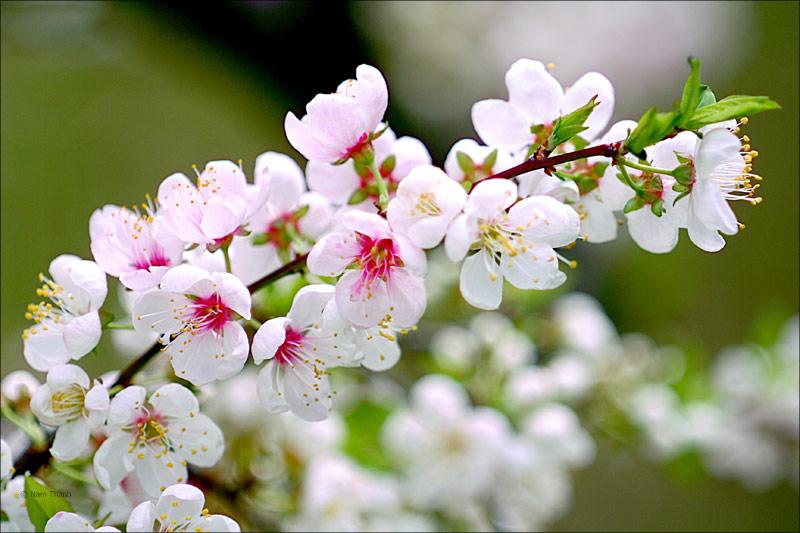 Mùa xuân là Tết trồng cây – Làm cho đất nước càng ngày càng xuân. Bác Hồ muốn khuyên, dạy chúng ta điều gì?
