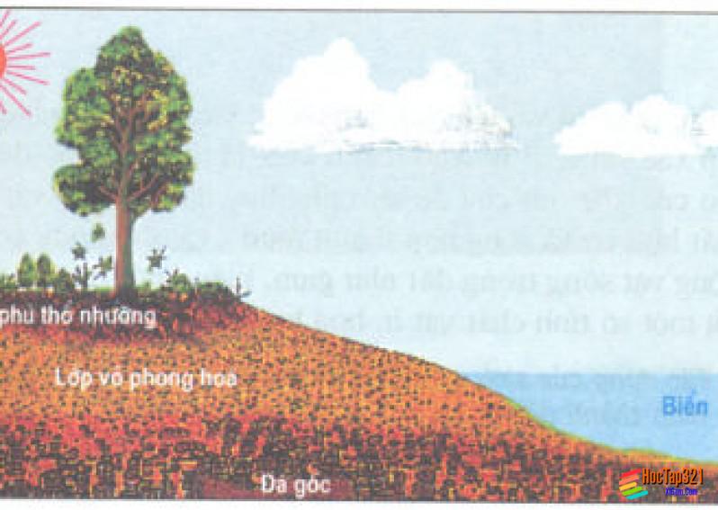 Thổ nhưỡng quyển Các nhân tố hình thành thổ nhưỡng